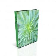 Cannabis Biblia Uprawy
